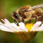 Обавештење пчеларима