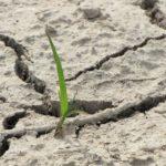 Суша најгора у средњем Банату, Жабљу, Тителу, Србобрану и Бечеју