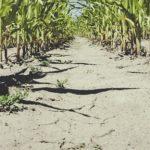 Жабаљ после суше: Опростите нам порез