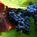 Дегустација вина из Србије, Мађарске, Румуније и Македоније