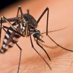 Прописи за јавне набавке неумољиви, а комараца све више