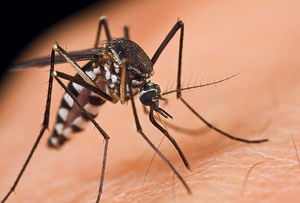 zabalj komarci javna nabavka