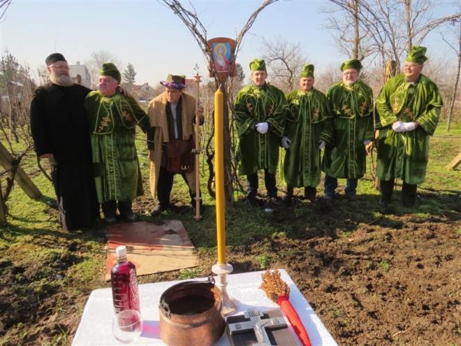 sajka titel slava sveti trifun 2015