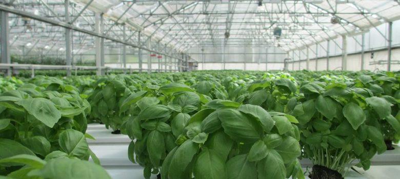 plastenik poljoprivreda