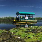 Катамаран Чигра плови од Инфо-центра Јегричка до осматрачнице за птице