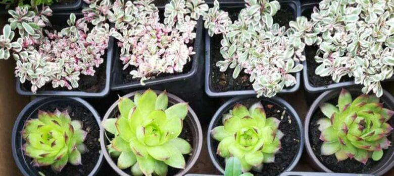 sajam hortikulture gospodjinci