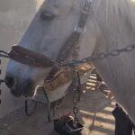 Терапијском коњу који помаже деци са инвалидитетом потребна помоћ