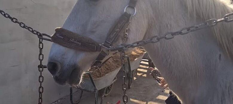 konj-herceg-sajkas